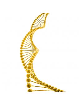 Detox-Gene